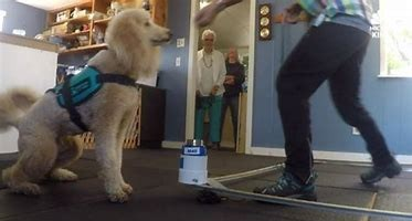 dogs are trained to detect parkinsons