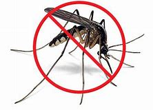 mosquito not